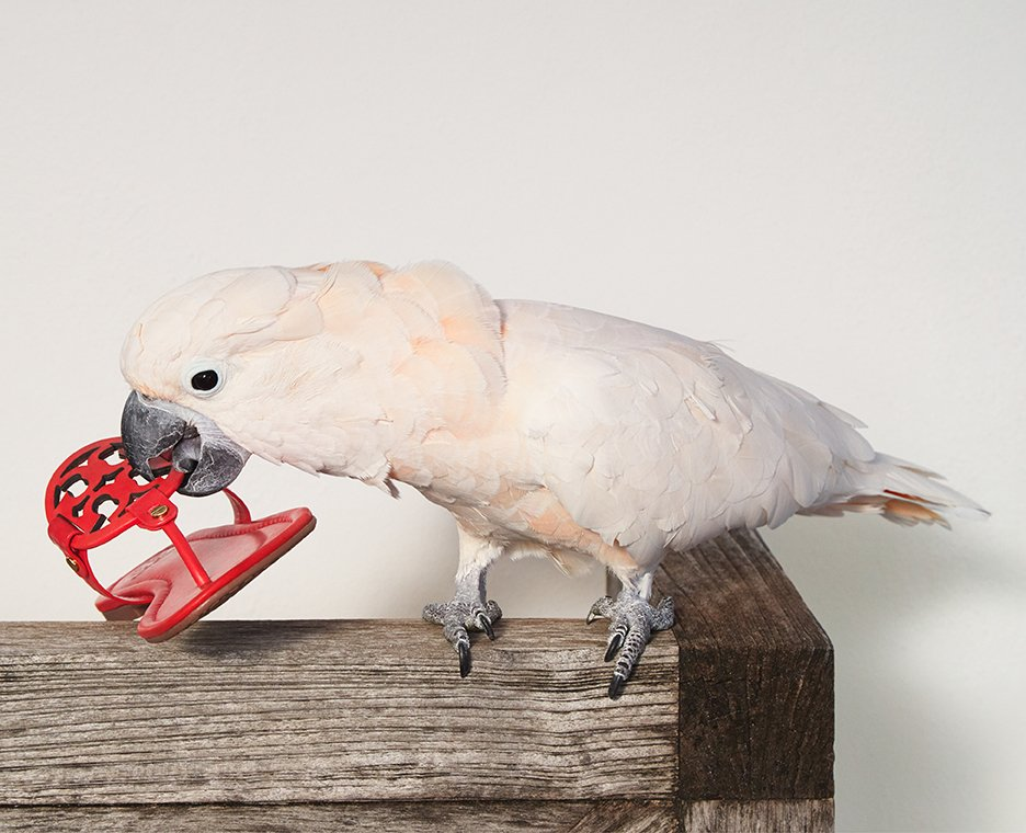 Image of a bird holding a Tory Burch sandal.