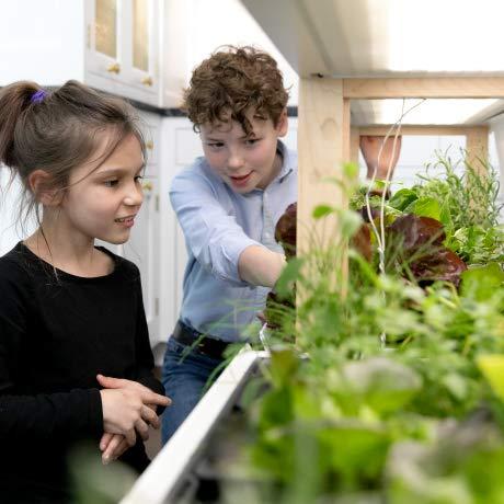 Rise Gardens - indoor smart garden