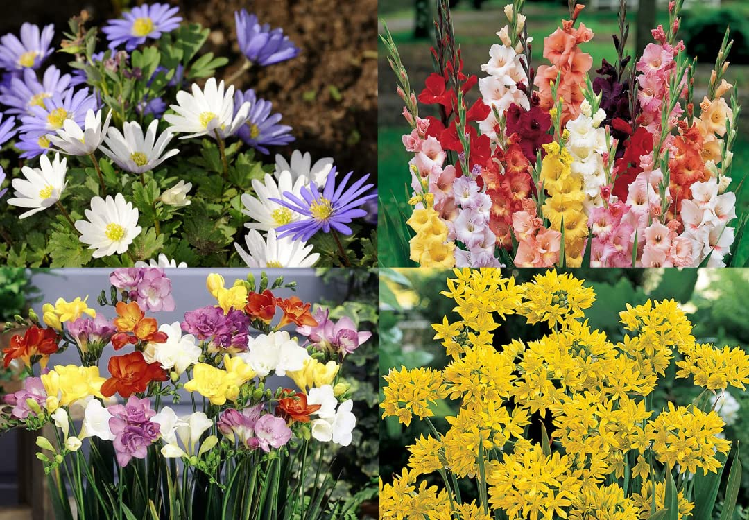 You Garden The Complete Summer Flowering Bulb Collection