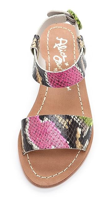 alice + olivia Bella 2 Band Flat Sandals