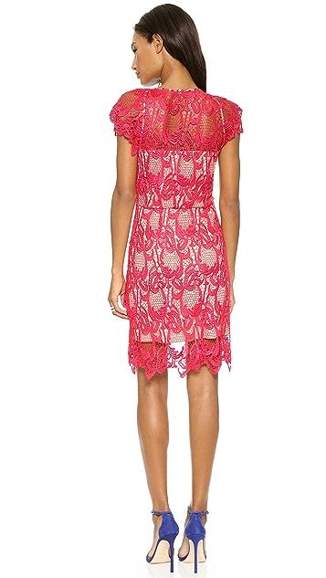 Madison Marcus Humanity Lace Dress