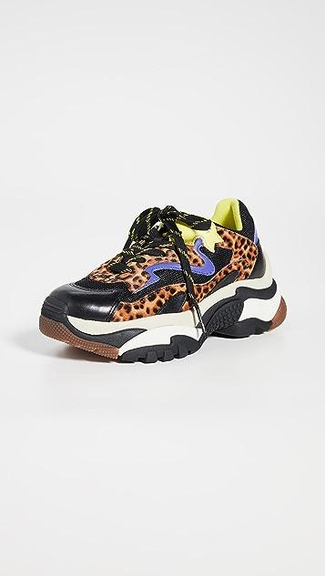 Ash Sneakers Addict Sneakers