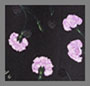 розовый кварц, гвоздика