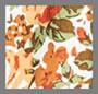Le Rose Fl Apricot