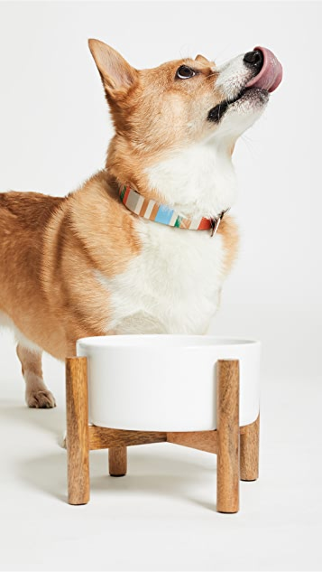 Gift Boutique Pet's Today's Special Dog Bowl