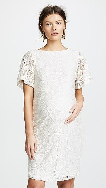 Ingrid & Isabel Lace Flutter Sleeve Dress