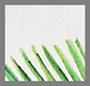 白色/绿色