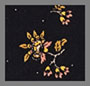 Cord Floral True Black