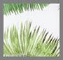 棕榈绿白色