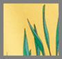 金盏花黄棕榈树