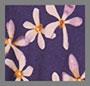紫罗兰花朵