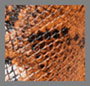 оранжевый под питона