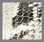 Black/Snake Print