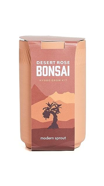 Shopbop @Home Desert Rose Bonsai Terracotta