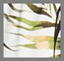 时尚棕榈树