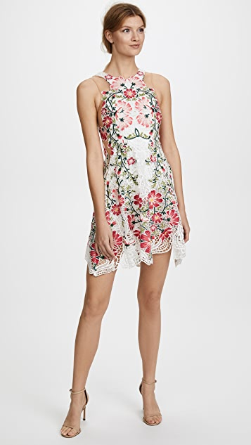 THURLEY Flower Bomb Lace Mini Dress