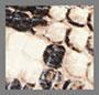 Roccia/Black Cap Toe