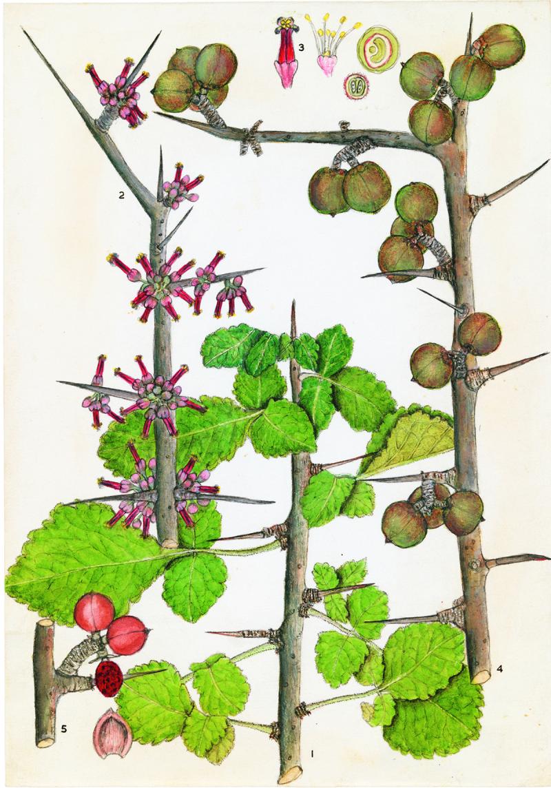 Bot-232-Olive-Coates-Palgrave-1200