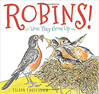 Birds-robins