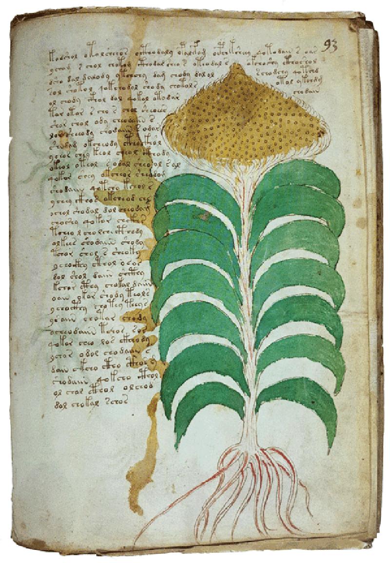 Voynich-plant