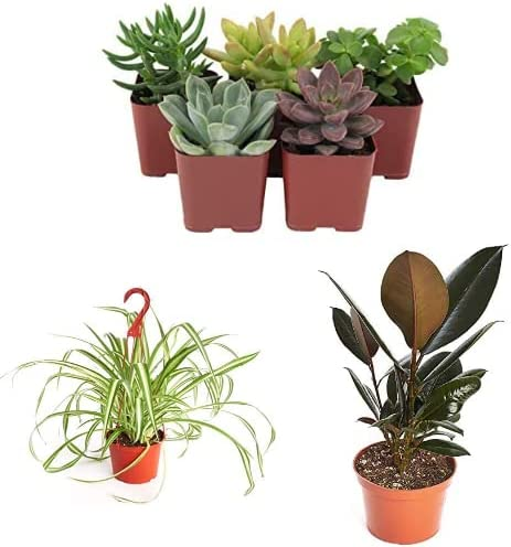 20% off Plants and Succulents from Shop Succulents