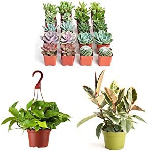 Save up to 25% off Shop Succulents Plants
