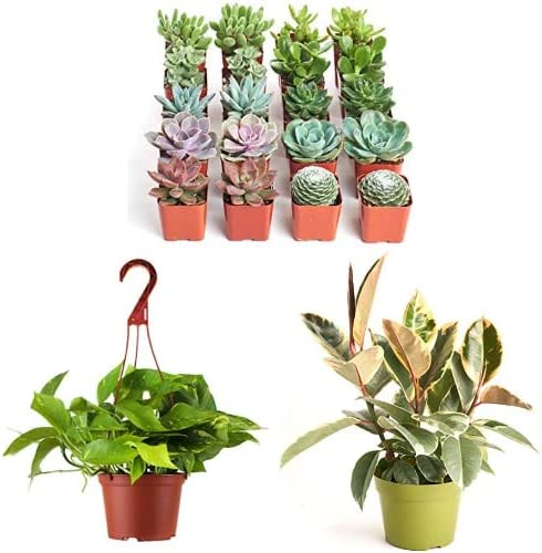 Save up to 25% off Shop Succulents Plants
