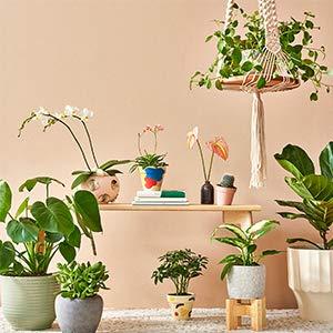 Calling All Plant Parents