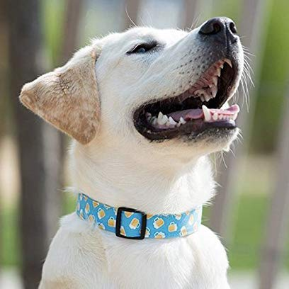 Handcrafted Pet Collars