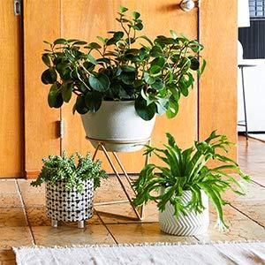 Quick Upgrade: Planter Refresh