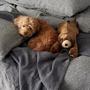 The CUTEST dog toys for your furry pup