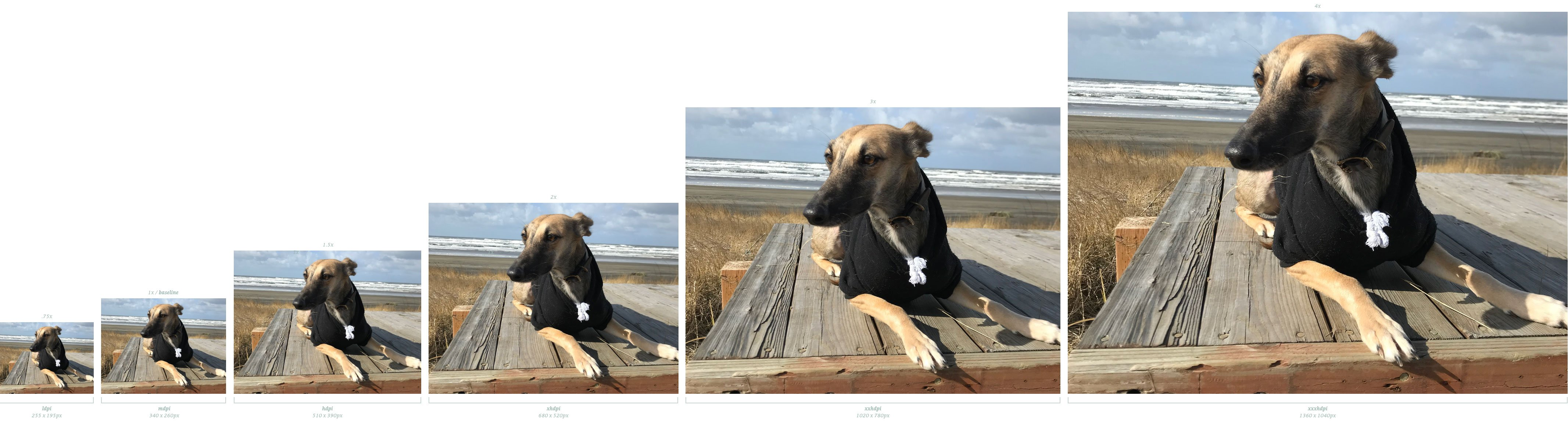 A photo of a dog scaling from smallest image on the left to largest image on the right.