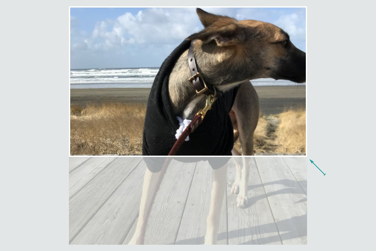 A cropped photo of the top half of a dog, showing the uniform scaling process with large images on smaller devices.