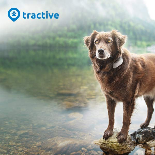 Visit Tractive