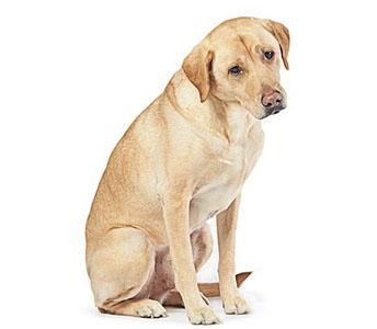 Los perros de Amazon