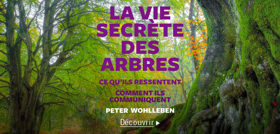 La vie secrète des arbres sur Audible
