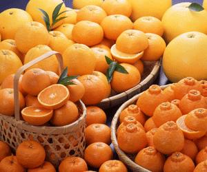 デコポンほか柑橘類(みかん、晩白柚、甘夏、河内晩柑など)