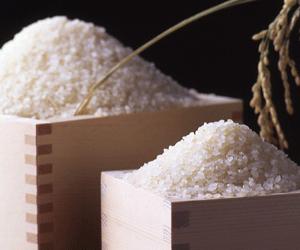 森のくまさん 他お米、穀類