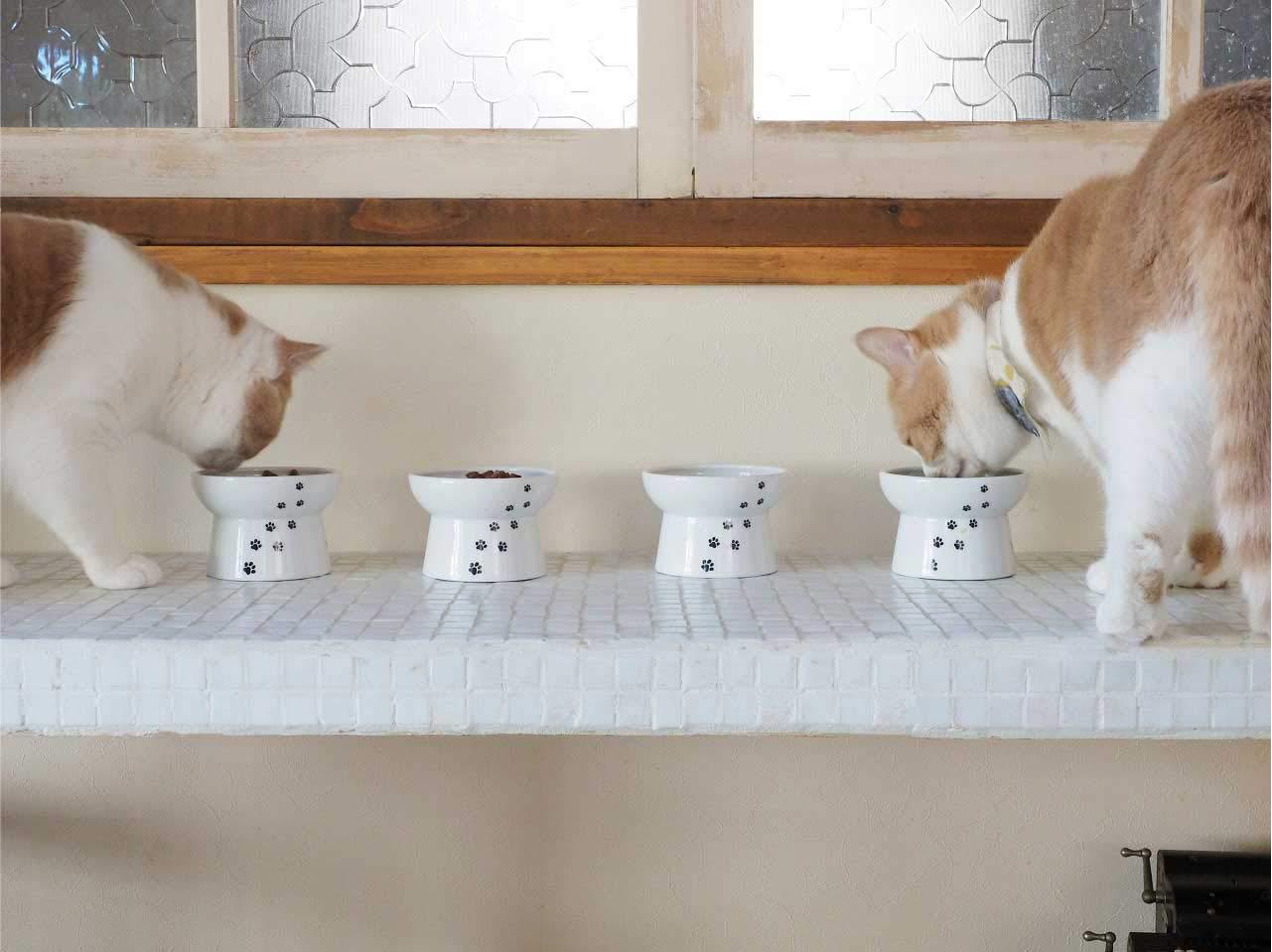 食べている猫が二つ