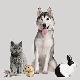 Crea un perfil para tu mascota