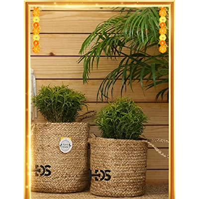 Live plants & planters | Up to 60% off