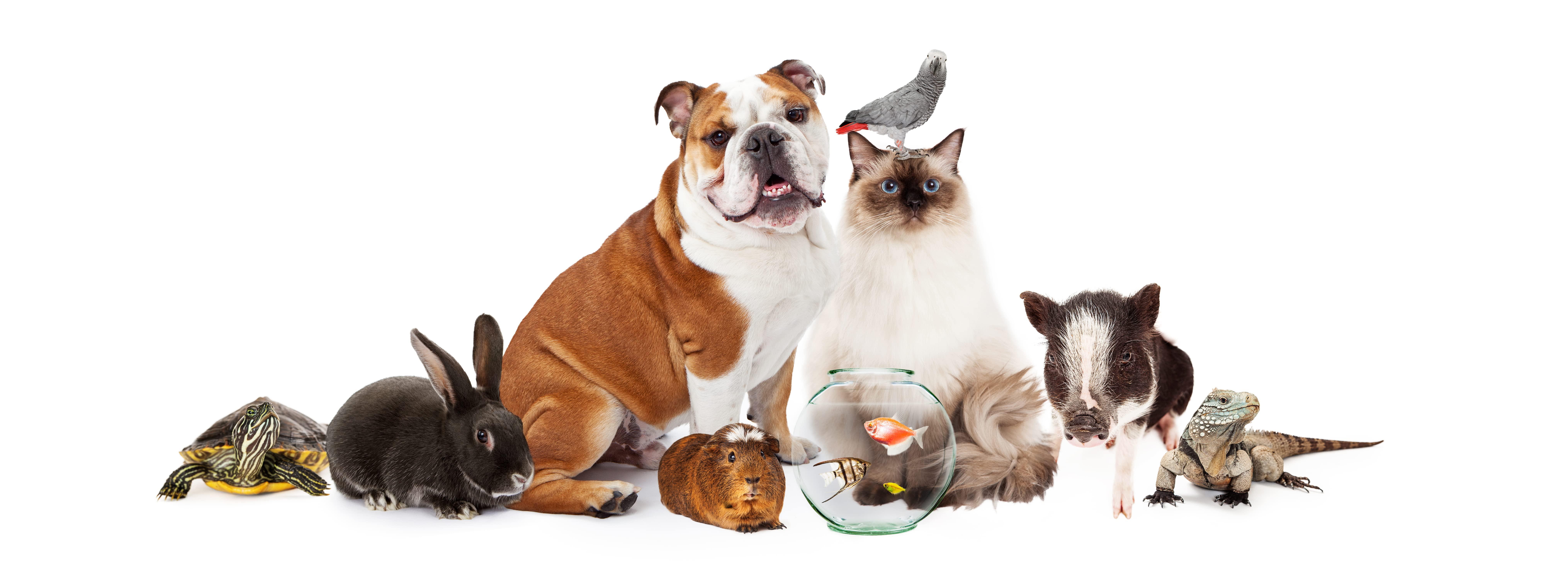 Venda Produtos Pet Online  no Marketplace Amazon