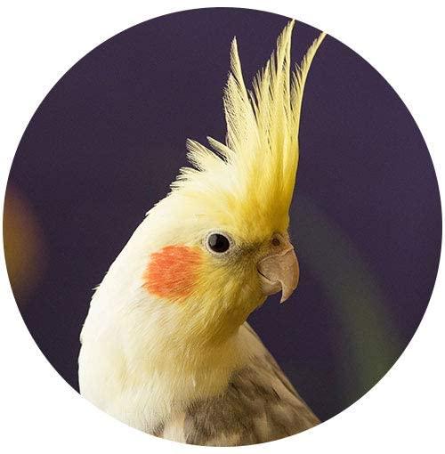 Venda Produtos para Aves Online  no Marketplace Amazon