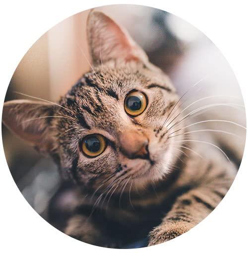 Venda Produtos para Gatos Online  no Marketplace Amazon