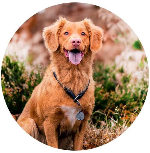 Venda Produtos para Cachorros Online  no Marketplace Amazon