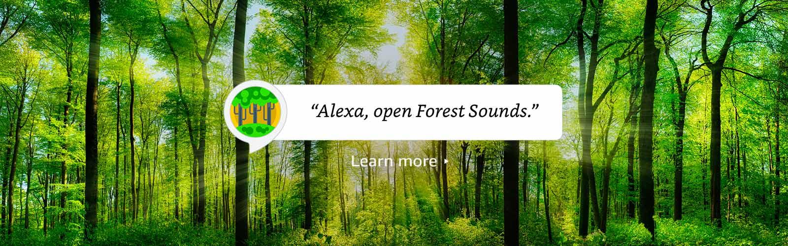 """""""Alexa, open Best Forest Sounds"""""""