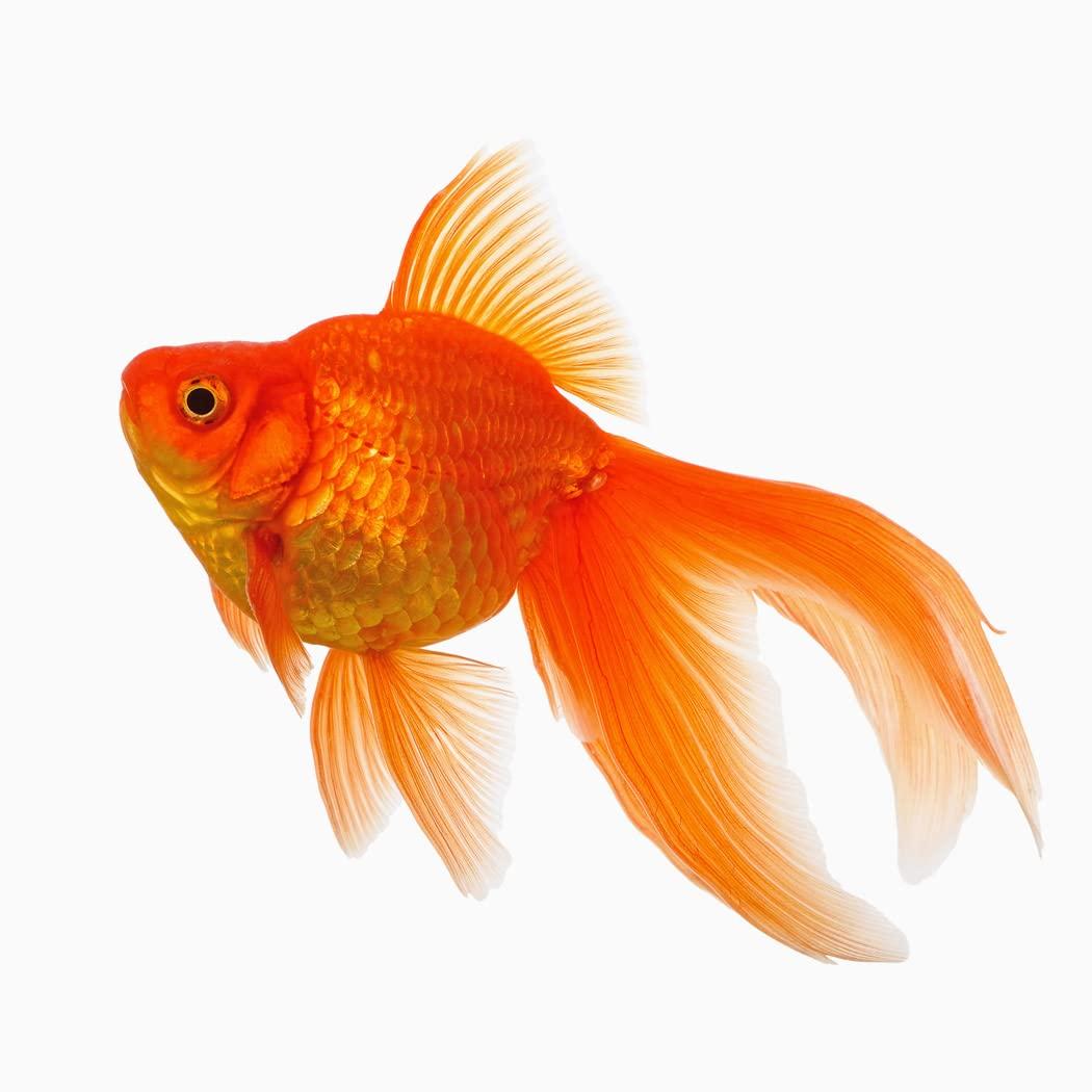 Balıklar ve Su Canlıları