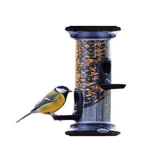 Fåglar & naturliv i trädgården