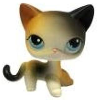 Sonmer Rare Littlest Brown Short Hair Cat Heart Face Cat
