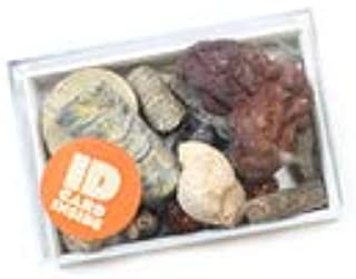 Mining Mikes Collection Box of Small Fossils Shark Teeth Crinoid Coral Ammonite